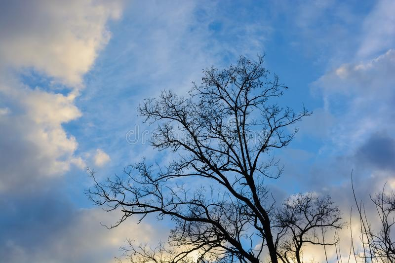 Nagi drzewo w jesieni sylwetce zdjęcia royalty free