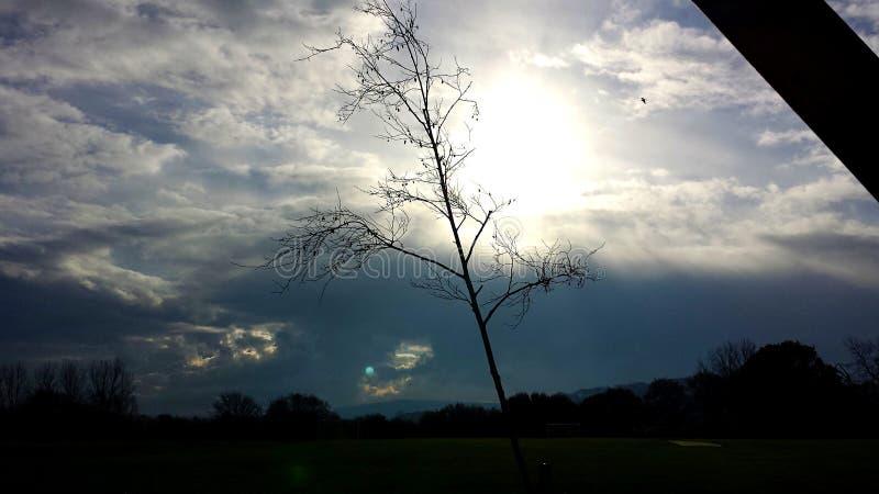 Nagi drzewo w Ringmer, East Sussex obraz royalty free