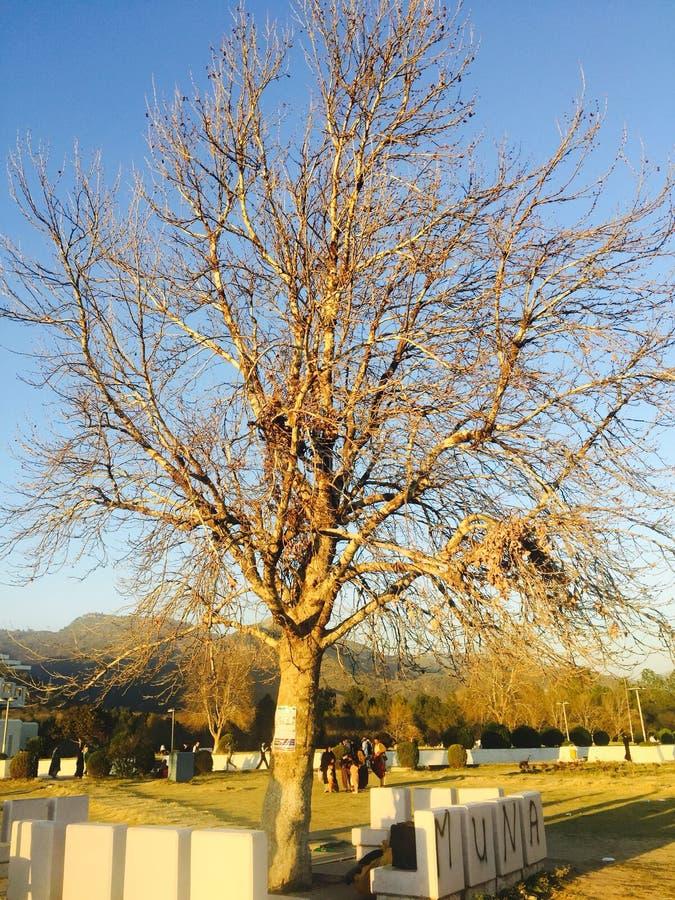 Nagi drzewo w spadku fotografia stock