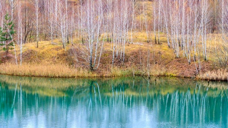 Nagi jesieni brzozy las odbija w wodzie spokojny błękitny jezioro zdjęcia royalty free