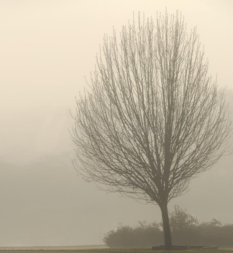 nagi mgły drzewo obrazy stock