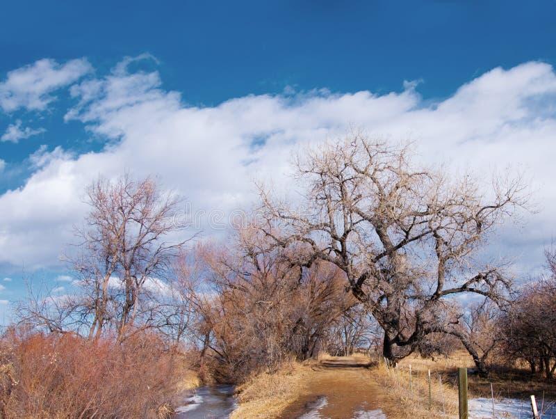 nagiej ścieżki nastroszeni drzewa obraz stock