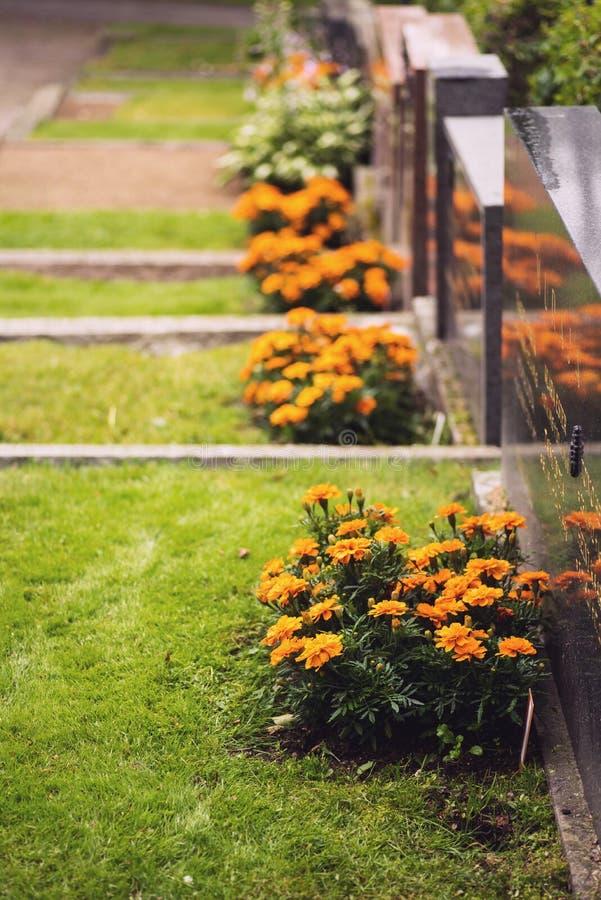 Nagietki zasadzający obok grób w finnish cmentarzu zdjęcia stock
