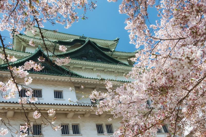 Nagoya Castle surrounged by cherry blossom. Nagoya Castle surrounged by frame of pink sakura or cherry blossom full bloom in spring season against blue sky royalty free stock photos