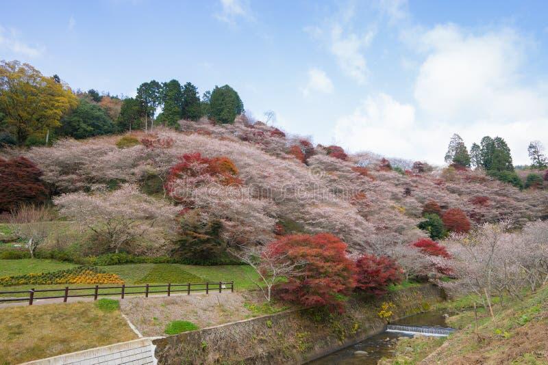 Nagoya, Obara Autumn Landscape mit Kirschblüte-Blüte Shikizakura lizenzfreies stockbild