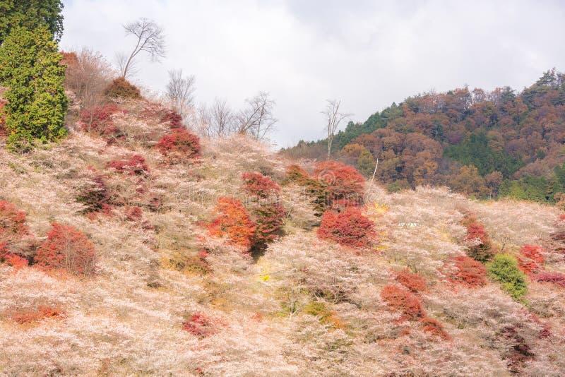 Nagoya, Obara Kirschblüte im Herbst stockfotos