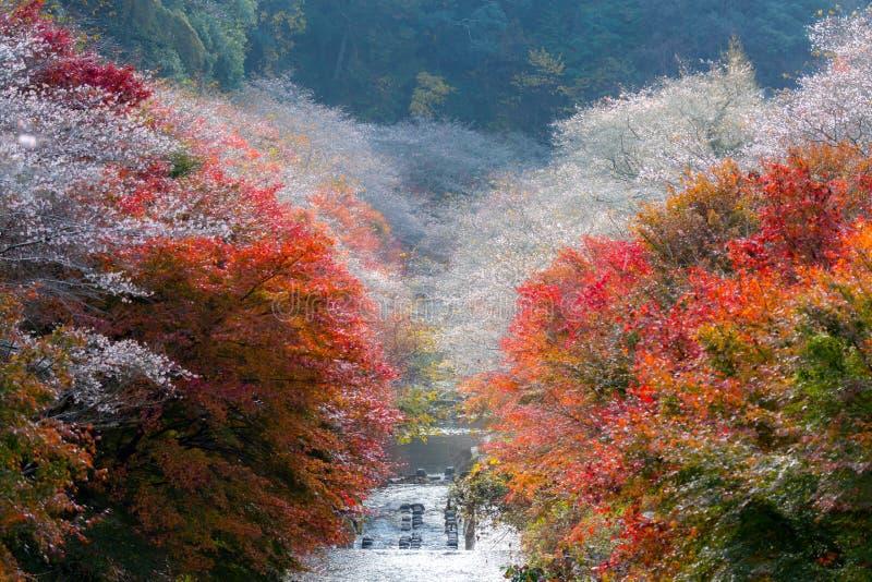 Nagoya, Obara Kirschblüte im Herbst stockfotografie