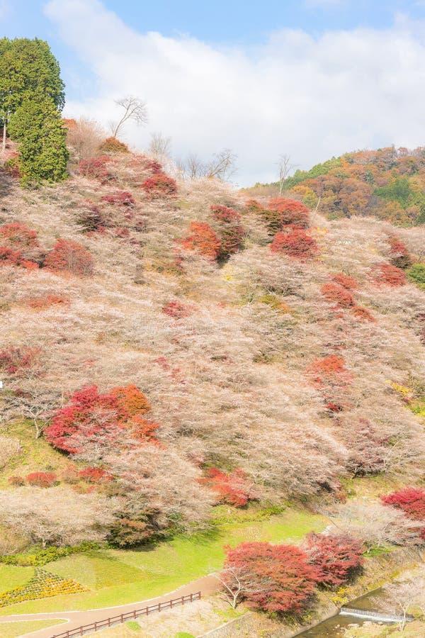Nagoya, Obara Kirschblüte im Herbst lizenzfreie stockfotos