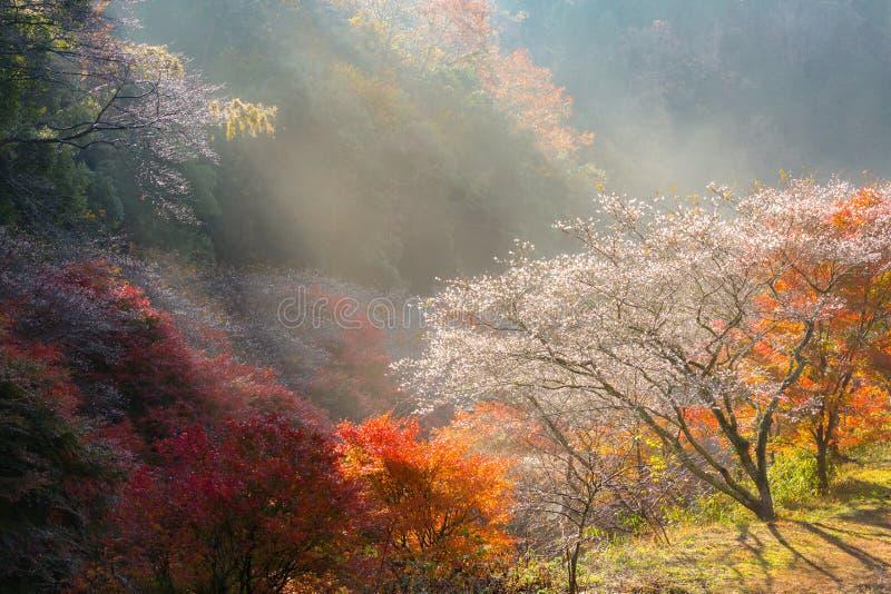 Nagoya, Obara Kirschblüte im Herbst lizenzfreie stockfotografie
