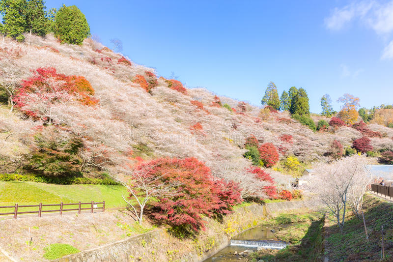 Nagoya, Obara Kirschblüte im Herbst stockfoto