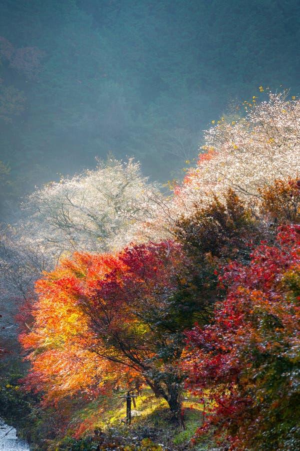 Nagoya, Obara Kirschblüte im Herbst lizenzfreies stockfoto