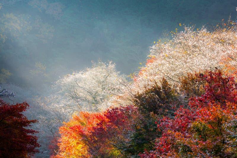 Nagoya, Obara Kirschblüte im Herbst lizenzfreies stockbild
