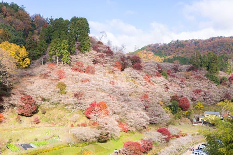 Nagoya, Obara Sakura en automne photos libres de droits