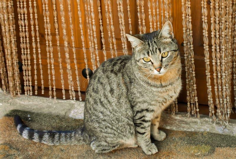 nah oben vom Porträt einer neugierigen Hauskatze, die auf einer Wolldecke nah an der Tür seines Hauses sitzt Die Katze schaut mit stockbild