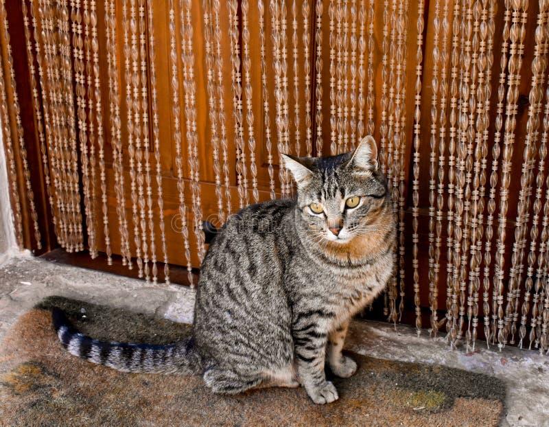 nah oben vom Porträt einer neugierigen Hauskatze, die auf einer Wolldecke nah an der Tür seines Hauses sitzt Die Katze schaut mit stockfotografie