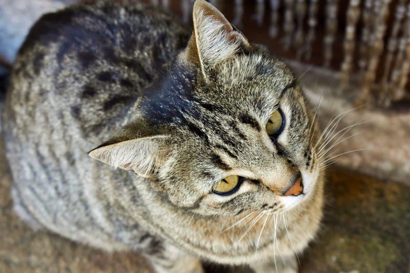 nah oben vom Porträt einer neugierigen Hauskatze, die auf einer Wolldecke nah an der Tür seines Hauses sitzt Die Katze schaut mit lizenzfreies stockbild