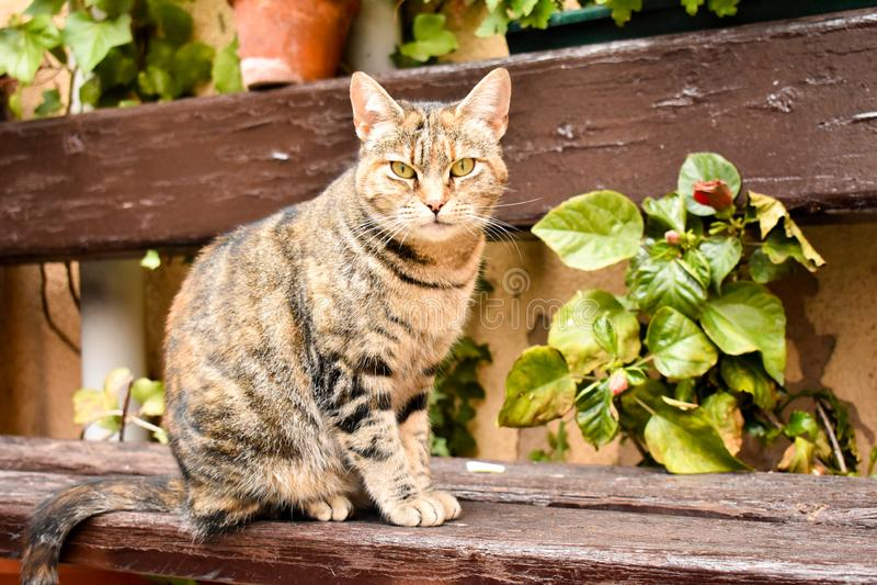 nah oben von einem Porträt einer neugierigen sitzenden Katze entspannen Sie herein sich Position auf einer Bank am Garten stockfoto