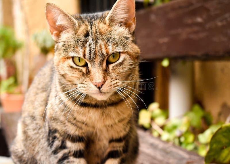 nah oben von einem Porträt einer neugierigen sitzenden Katze entspannen Sie herein sich Position auf einer Bank am Garten lizenzfreies stockbild