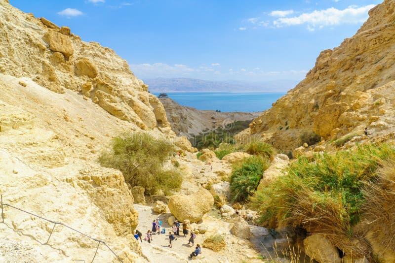 Nahal David dal, i den Ein Gedi naturreserven arkivfoto
