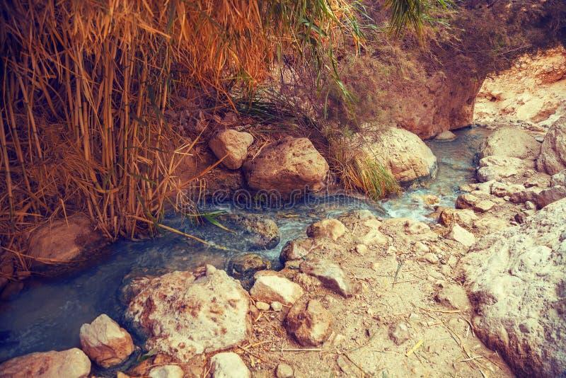 Nahal David rzeka w Ein Gedi rezerwacie przyrodym Izrael zdjęcie royalty free