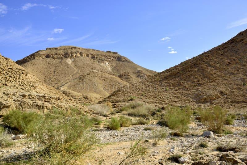Nahal Zafit in deserto di Negev immagine stock