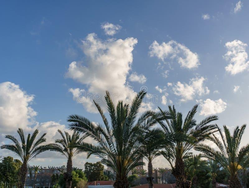 NAHARIYA, ISRAELE 25 MARZO 2018: Albero del cocco con cielo blu di mattina sopra la città fotografia stock