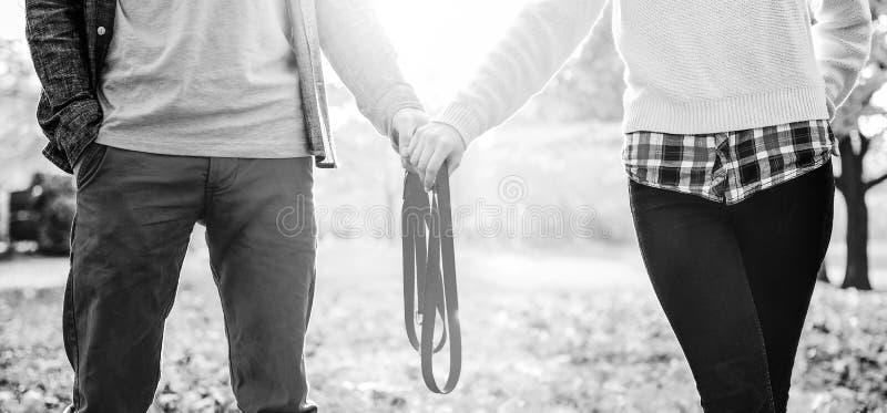 Nahaufnahme auf den jungen Paaren, die Leine im Herbstpark zusammenhalten stockbild
