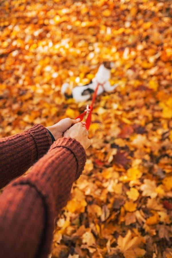 Nahaufnahme auf der Frau, die draußen Hund auf Leine im Herbst hält lizenzfreie stockfotos