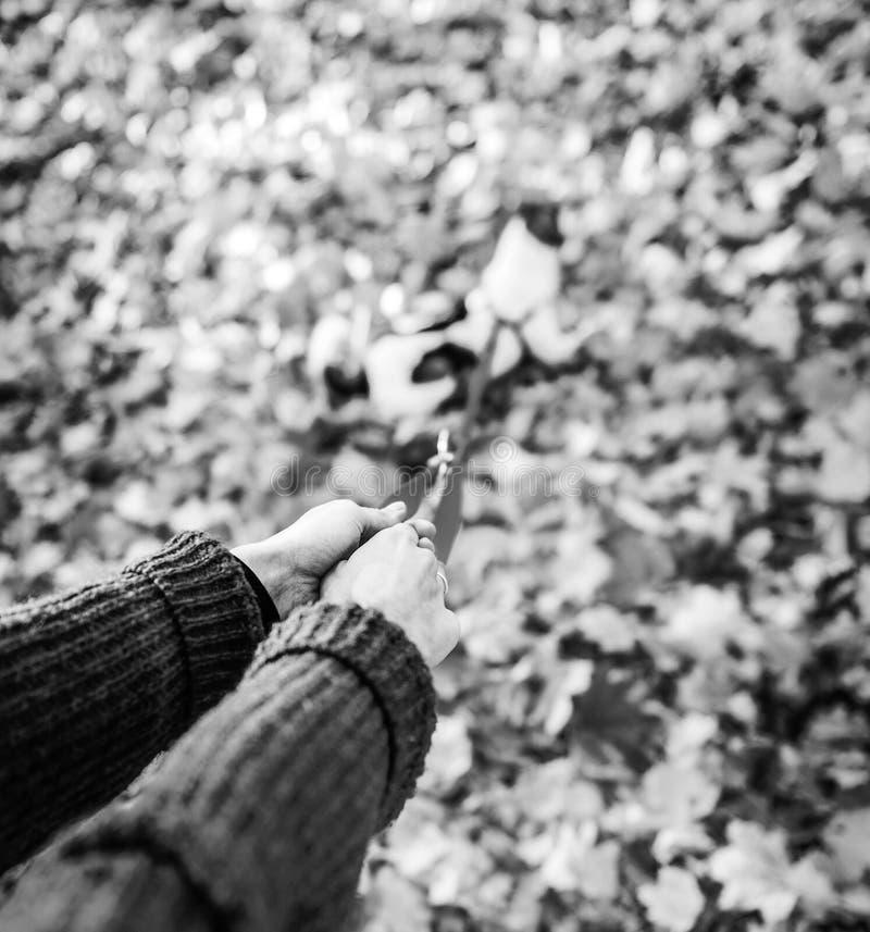 Nahaufnahme auf der Frau, die draußen Hund auf Leine im Herbst hält lizenzfreies stockbild