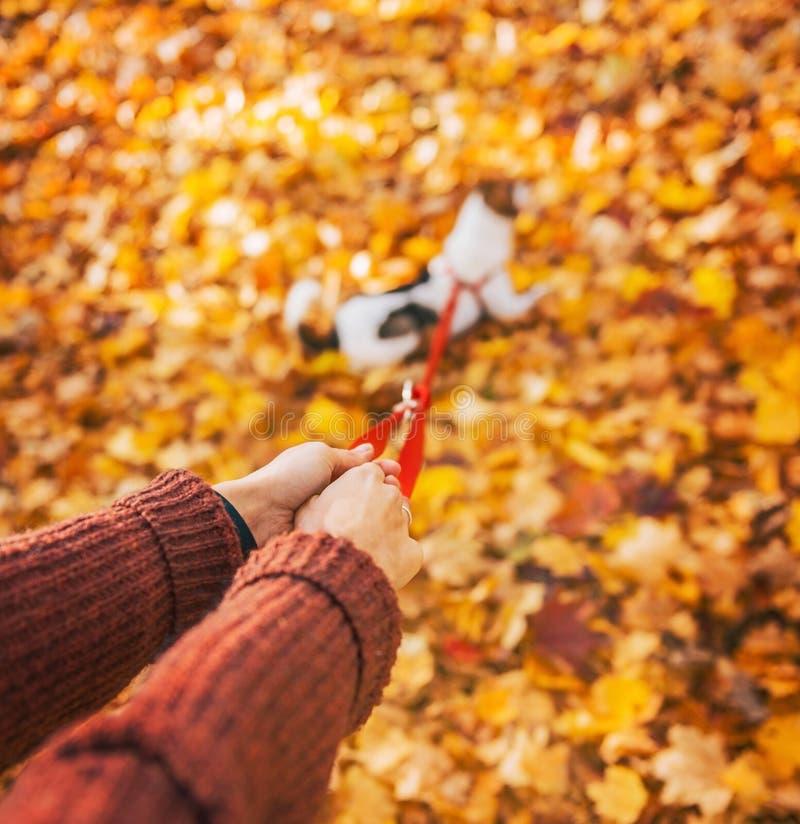 Nahaufnahme auf der Frau, die draußen Hund auf Leine im Herbst hält stockfotos