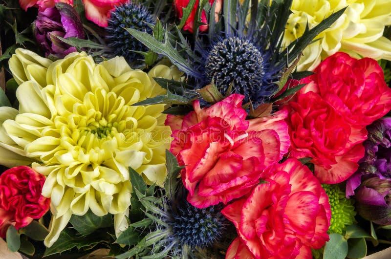Nahaufnahme blüht Distel, Gartennelke, Goldengänseblümchen Beschneidungspfad eingeschlossen stockfotografie