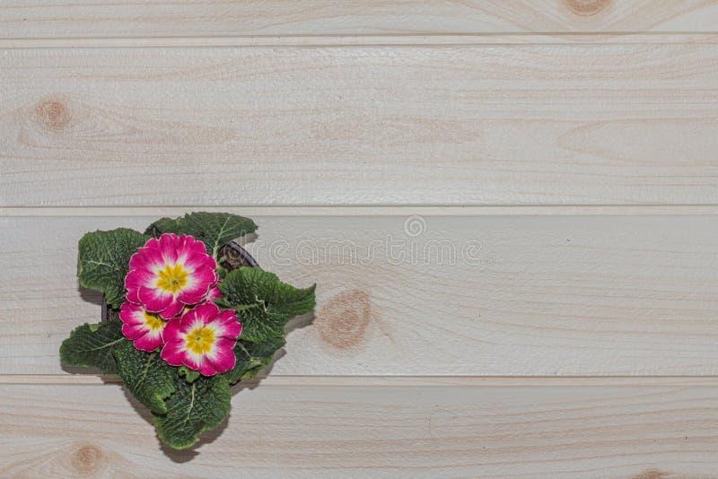 Nahaufnahme-Blumentöpfe auf hölzerner Schreibtisch- und Cremefarbe tapezieren lizenzfreies stockbild