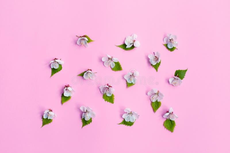 Nahaufnahme der Azalee-Blume Frühjahrapfelblüte, rosa Blumenhintergrund-, Pastell- und weicheblumenkarte, selektiver Fokus stockfotos