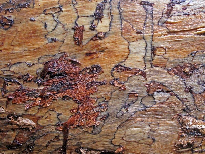 Nahaufnahme der Barke eines Baums im Wolkenwald Monteverde, Costa Rica stockfoto