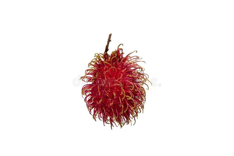 Nahaufnahme der hellen roten Rambutanfrucht lokalisiert auf weißem Hintergrund stockbild