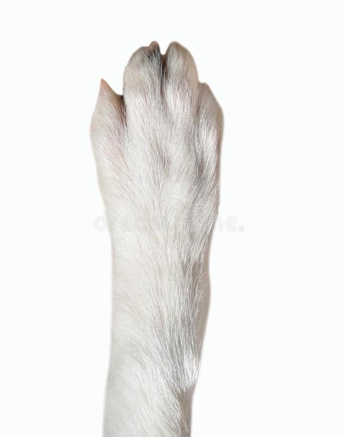 Nahaufnahme der Hundetatze stockfotos