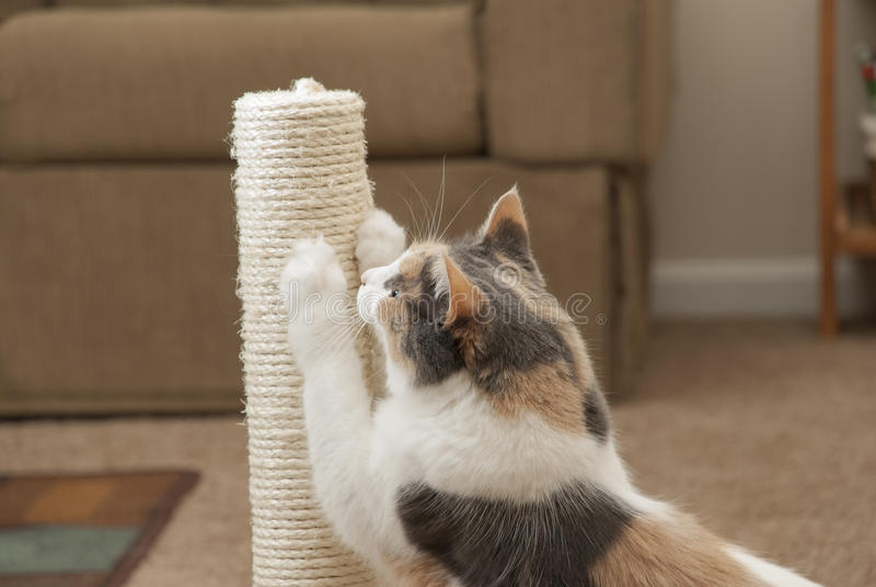 Nahaufnahme der Katze unter Verwendung des Verkratzens des Beitrags lizenzfreie stockfotos