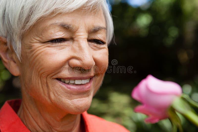Nahaufnahme der lächelnden älteren Frau, die frische Rosarose betrachtet stockbilder