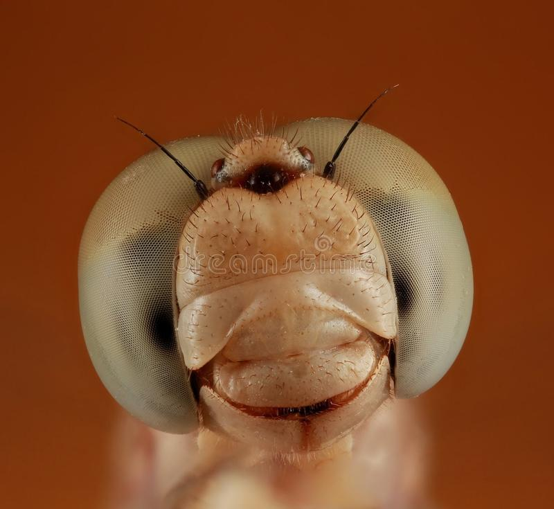 Nahaufnahme der Libelle lizenzfreie stockfotografie