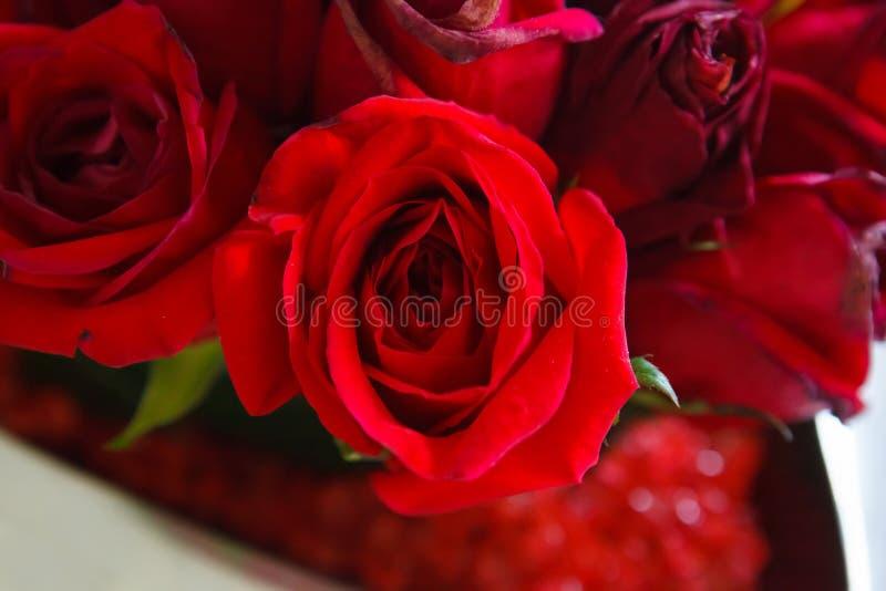 Nahaufnahme der roten Rosen stockbild