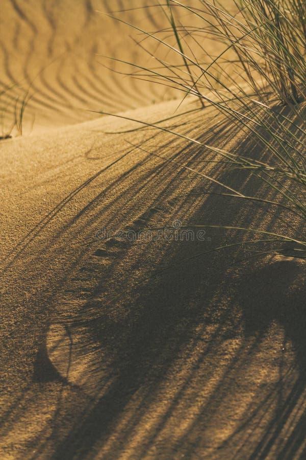 Nahaufnahme der Schatten der Gras- und Windkennzeichen im Sand auf Dünen setzen auf den Strand stockfotografie