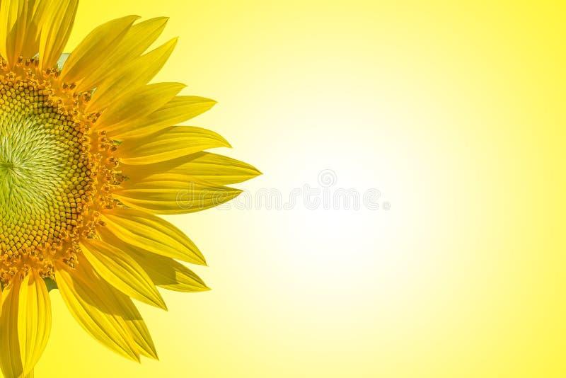Nahaufnahme der Sonnenblume auf gelbem Hintergrundartpastell tont Hintergrund des Raumes für Texteingabe stockbilder