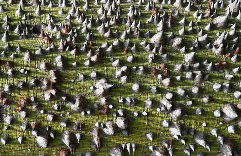 Nahaufnahme der ursprünglichen Baumbarkebeschaffenheit stockbild