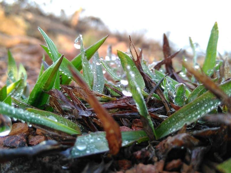 Nahaufnahme der vollkommenen Wassertröpfchen auf einem Grasblatt stockbilder