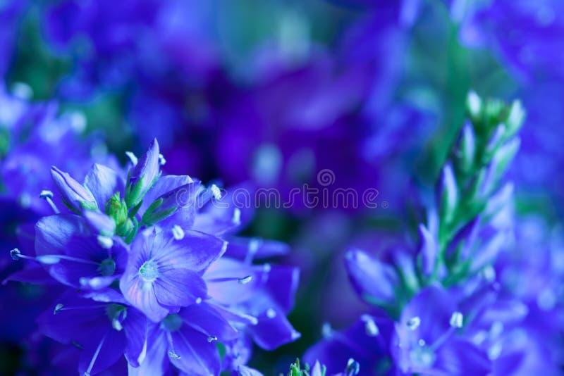 Nahaufnahme der wilden Blumen stockfotos