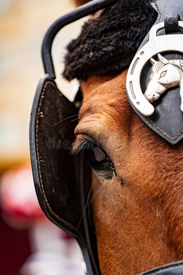 Nahaufnahme des Auges eines Pferds lizenzfreie stockfotos