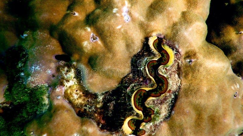Nahaufnahme des bunten Korallenriffs lizenzfreies stockfoto