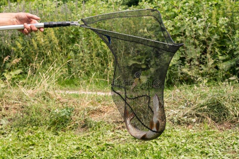 Nahaufnahme des frisch gefangenen Spiesses auf einem Haken in seiner Hand des Fischers auf dem Flusshintergrund stockfotos