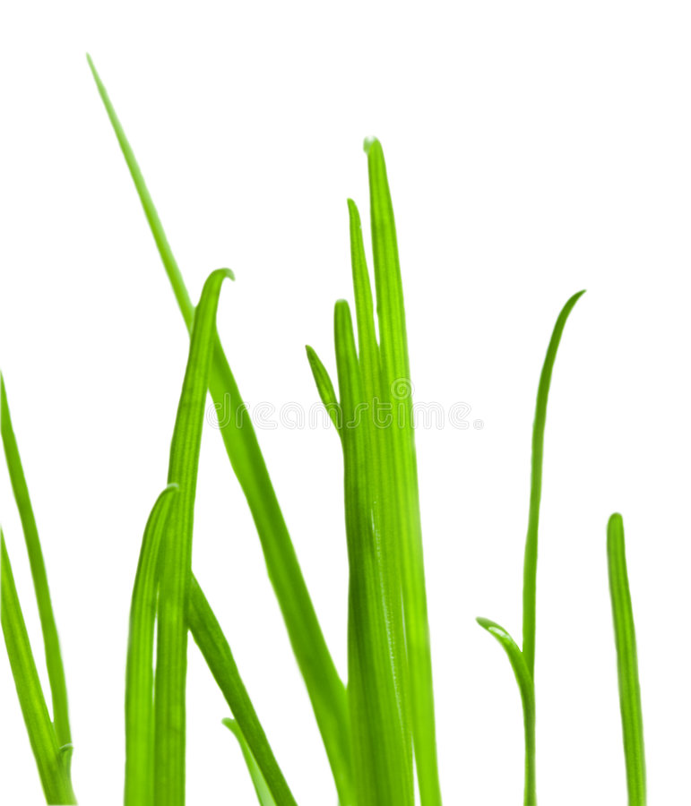 Nahaufnahme des grünen Grases stockfotografie
