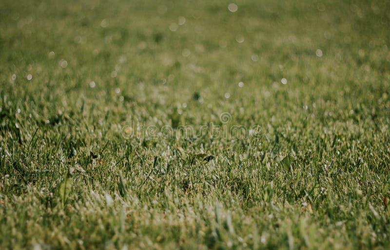 Nahaufnahme des gr?nen Grases Sch?ner Rasen Die Beschaffenheit des grünen Grases auf dem Feld Hintergrund mit Gras stockfoto
